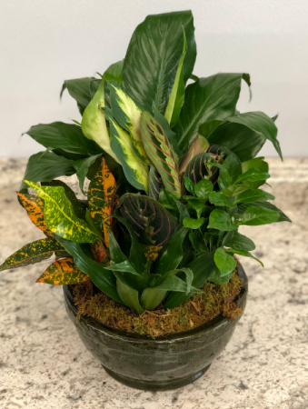 Dish Garden Planter
