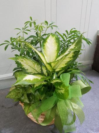 Dish Garden Planter Basket Green Plant
