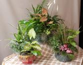 Dish Garden Planters
