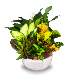 Dish Garden potted plants in Coral Springs, FL | Hearts & Flowers of Coral Springs