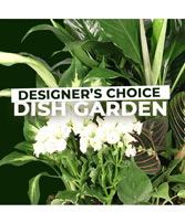 Dish Garden Selection Designer's Choice