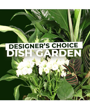 Dish Garden Selection Designer's Choice in Lincroft, NJ | Lincroft FAB Florist & Gifts/Silver Tulip Florist