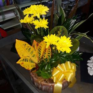 Dish Garden with Fresh Cut Flowers Added  in Saint Augustine, FL | FLOWERS BY SHIRLEY