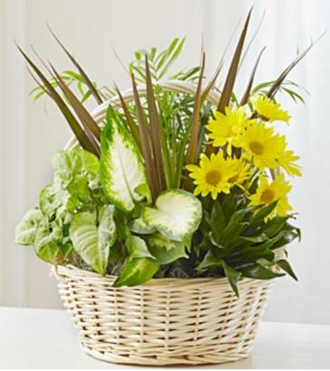 Dish garden with fresh cut flowers Dish garden