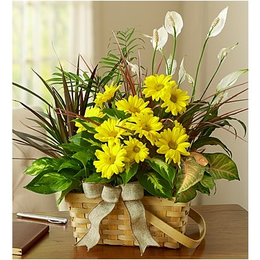 Dish Garden with Fresh Cut Flowers Plant Basket