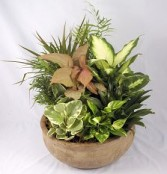 Dish Garden with Green Plants Funeral, birthday, office and more