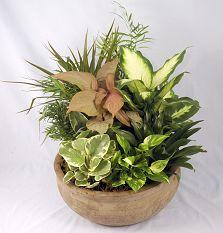 dish garden with green plants funeral birthday office and more - Dish Garden Plants