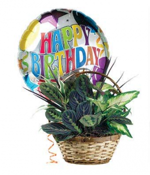 Dish Garden with Happy Birthday balloon *Balloon Included in Lebanon, NH | LEBANON GARDEN OF EDEN FLORAL SHOP