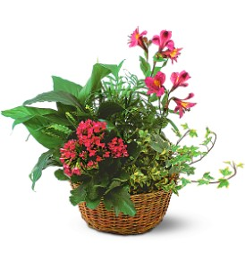 Dish Garden With Pinks plant