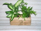 Dish Garden/Rustic Wood Container Plant