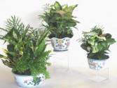 ROMA FLORIST DISH Gardens  Ceramic Floral