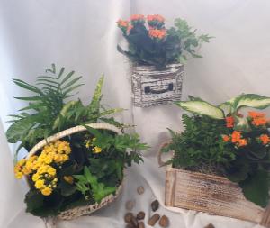 Dish Gardens Plants in Thunder Bay, ON | Grower Direct - Thunder Bay