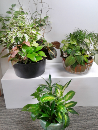 Dish Gardens Potted Green Plants