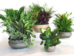 Dish gardens in ceramic  in Lebanon, NH | LEBANON GARDEN OF EDEN FLORAL SHOP