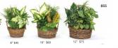 Dishgarden 855 Planter