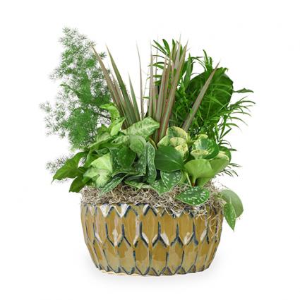Dishgarden- Ceramic