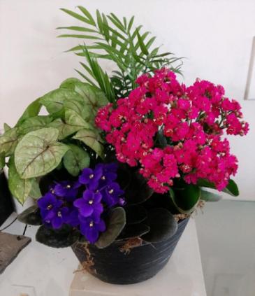 Dishgarden Flowering plant