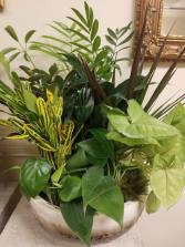 dishgarden foliage plants