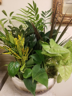 dishgarden foliage plants in Knoxville, TN | ALWAYS IN BLOOM LLC