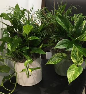 Dishgarden  Plant in Houston, TX | EXOTICA THE SIGNATURE OF FLOWERS