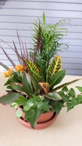Dishgarden Planter Plants