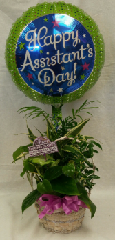 Dishgarden Planter with Balloon