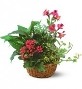 Dishgarden with Pinks           TF139-3 Plants
