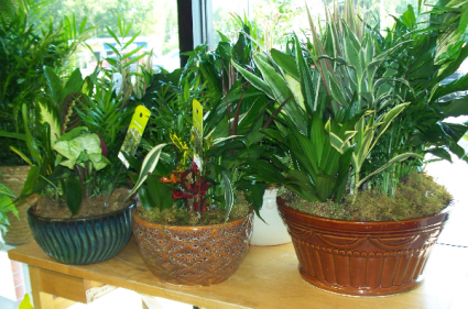 Dishgardens in Ceramic and Metal Containers