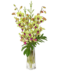 DIVINE DENDROBIUMS Vase of Orchids