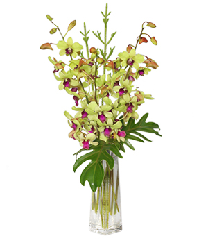 DIVINE DENDROBIUMS Vase of Orchids in Norway, ME | Green Gardens Florist & Gift Shop