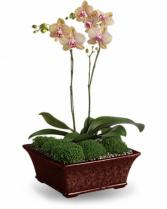 Divine Orchid Plant Flower