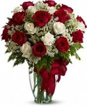 Divine Roses 24 Red & White Premium Roses in Addison, TX | MILLE FLEURS