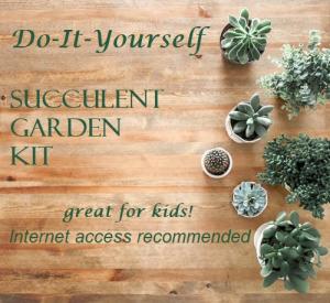 Small DIY Succulent Garden Kit   in Bluffton, SC | BERKELEY FLOWERS & GIFTS
