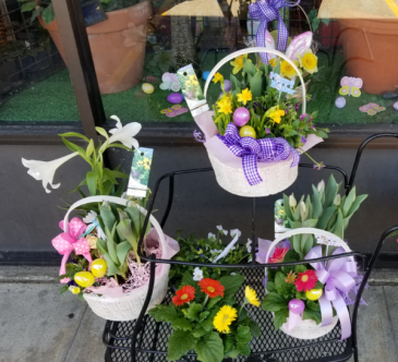 Dodo's Blooming Bulb Baskets $35.00