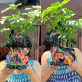 Doggy Talavera Plant Arrangement