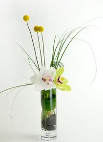Dolce Segretaria GEF015Bloom of cymbidium orchid