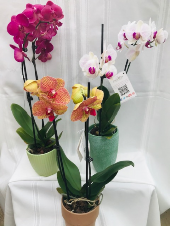 Don't Overlook an Orchid Blooming Plant