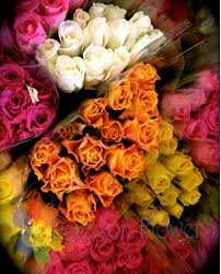 Dont See Your Color! Give Us a Call ! We Will Find Them For You! in Margate, FL | THE FLOWER SHOP OF MARGATE