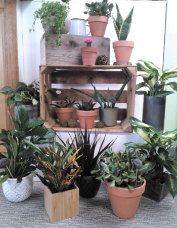 Dorm Room Essentials Green Plants