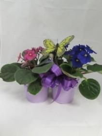 Double African Violet Custom Fitzgerald Flowers Arrangement