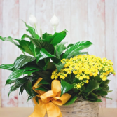 Double Basket with Blooming Plants