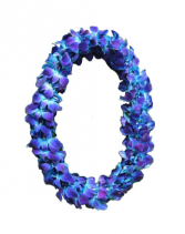 DOUBLE BLUE ORCHID  GRADUATION LEI