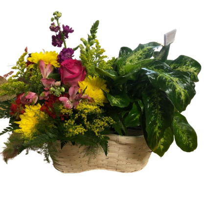 Double Delight Tropical Potted and Fresh Combo