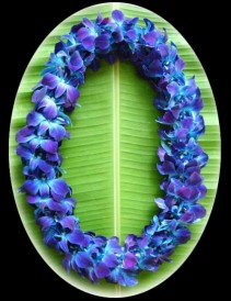 DOUBLE DYED BLUE ORCHID LEI Graduation Lei