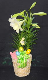 Double Easter Lilies in a Basket FHF-E2122 Plant