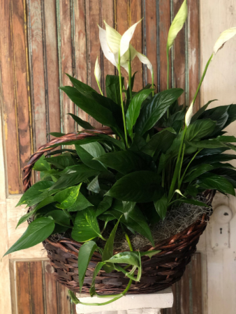 Double Green Plant Basket