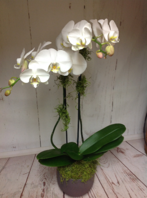 Double orchid  in Easton, CT | Felicia's Fleurs