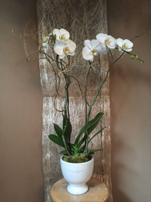 Double orchid   in Ozone Park, NY | Heavenly Florist
