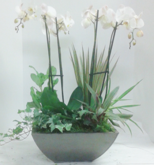 Double Orchid Garden  in Tottenham, ON | TOTTENHAM FLOWERS & GIFTS