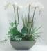 Double Orchid Garden